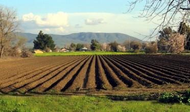 Campo coltivato del Medio Campidano