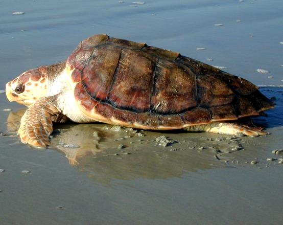 vasche in condizioni igieniche pessime tartarughe