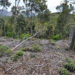 alberi caduti