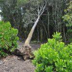 albero schiantato