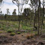alterazione habitat ceduazione