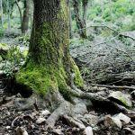 colletti alberi scoperti
