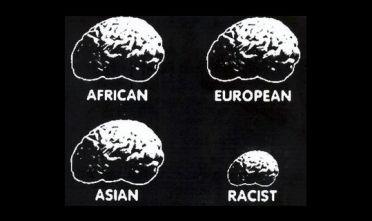 cervelli2