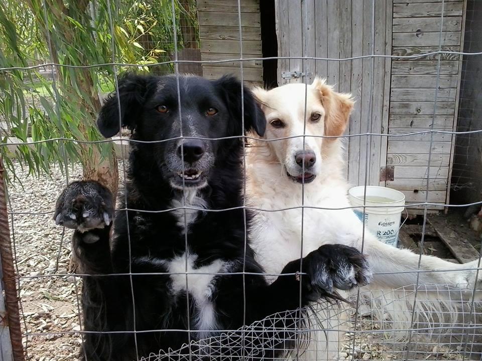 Cucciolo Di Cane Impiccato A Nuoro Raccolte 50mila Firme Per Avere