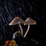 pagine-da-funghi-2