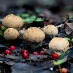 pagine-da-funghi-6