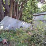 orto botanico danni
