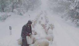 pastori-neve