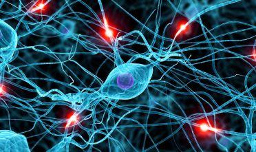 cervello-apprendimento-radiosapienza