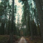Bultei, Foresta dei fiorentini