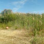 cava Monastir_discarica Fluorsid