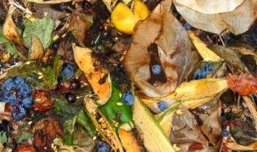 frazione-organica-rifiuti