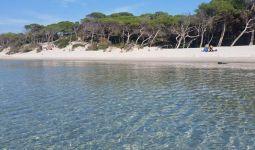 spiaggia-maria-pia-alghero-pineta
