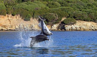 Trofeo 'Occhio alle pinne': avvistamento di delfini