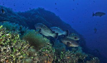 area-marina-protetta-tavolara