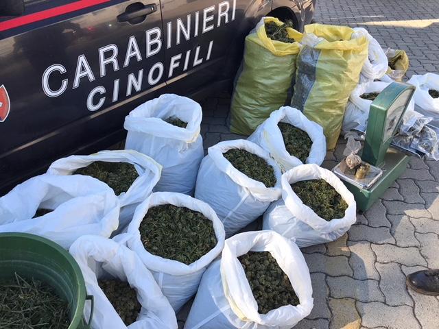 Nell 39 Ovile Droga Per Un Milione Di Euro Cinque Arresti A