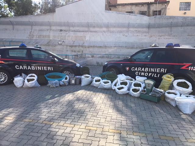 Nell 39 ovile droga per un milione di euro cinque arresti a for Serra agricola usata