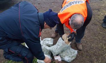 Carabinieri, sequestro droga a Sinnai